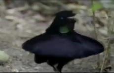 #Crazy #Bird