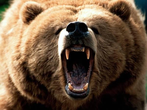 roar bear
